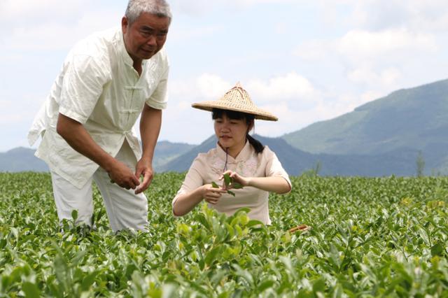 茶叶的基本知识