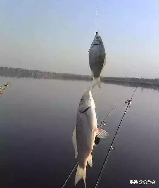 动态钓鱼用什么饵料