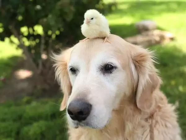 狗狗脾气差,动不动就发飙,那是因为你没有找到原因