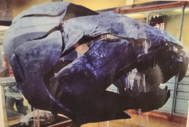 """带你康康""""鱼的故乡"""",四亿年前的曲靖古鱼类化石"""