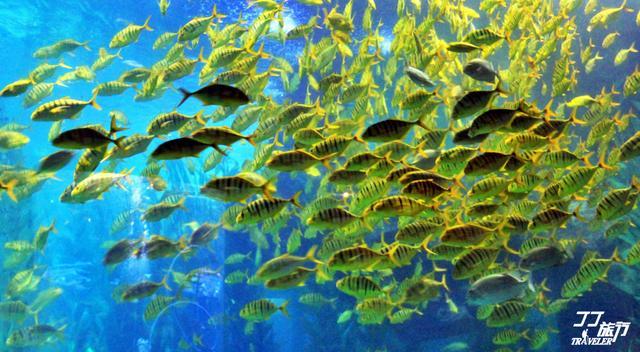 青岛海底世界的作文200字第1篇图片