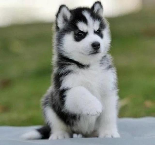 狗价格排名_宠物犬排名及价格