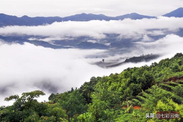 武夷岩茶大红袍铁盒顶中国山水一壶茶多少钱