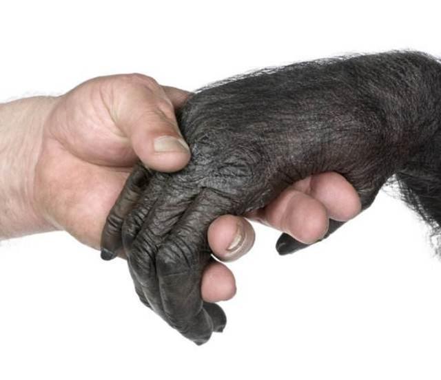 """为什么有些科学家说人是""""第三种黑猩猩"""",这种说法有什么依据?"""