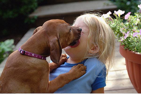 宠物狗这七种行为,很多人都误解,看看你有没有中招呢?