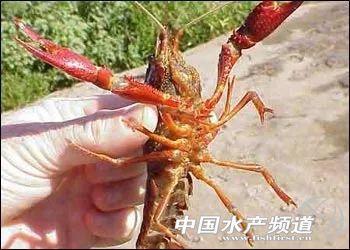 中国农业大学和华中农业大学考研微生物学的食用菌方向哪个好