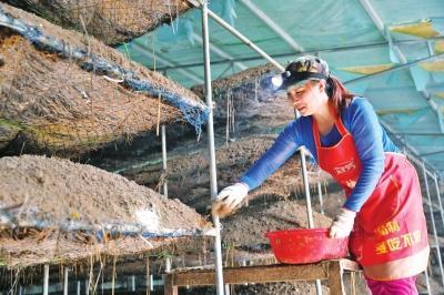 种植蘑菇国家有补贴吗