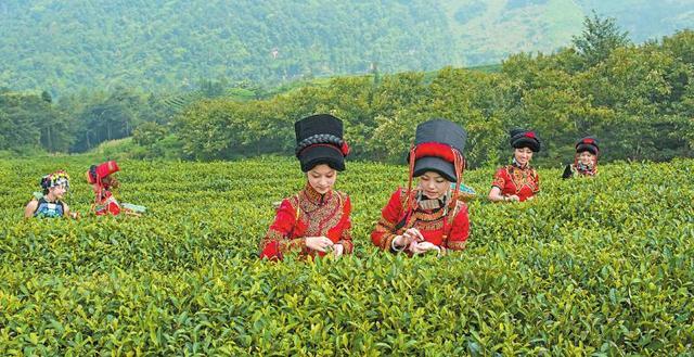 马边茶叶市场