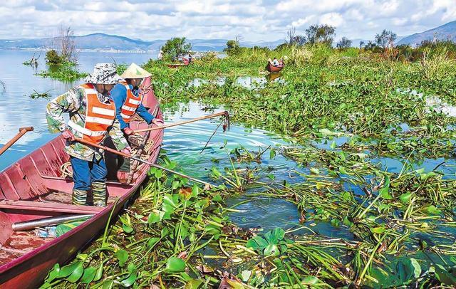 """治理水上""""绿色污染"""",中能装备进军河道保洁行业"""