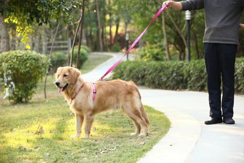 在街头有狗要咬你,第一反应该做什么?
