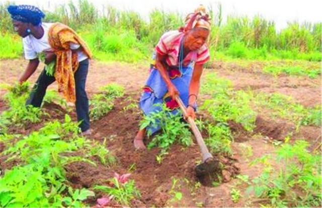 非洲农业为什么不发达