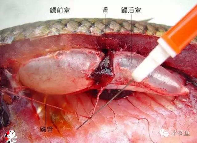 鱼类特有的四个生物学特性---食性与胃肠结构,呼吸,栖息,繁殖