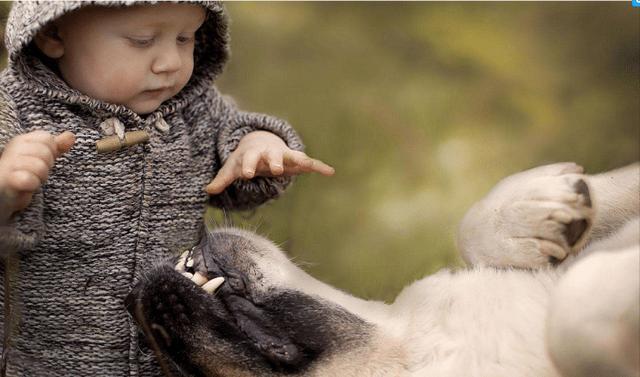 如何让孩子与宠物和睦相处?作为家长应该注意什么?
