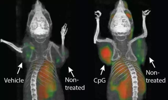 "《Science》重磅!""癌症疫苗""可使小鼠癌症全部消退"