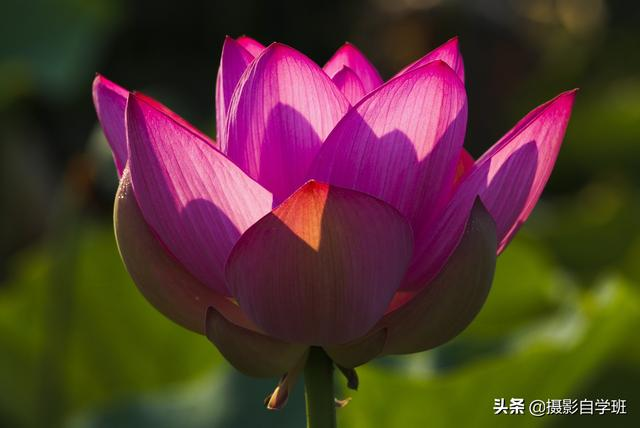 18张花朵摄影作品,教你七个拍花大忌,再送你7个花朵拍摄技巧