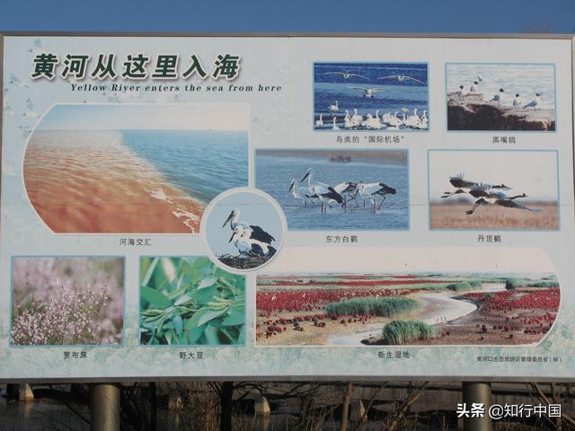 黄河的入海口在历史上为什么由江苏改道山东了