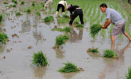学生学籍上户口性质农业与非农业有什么区别