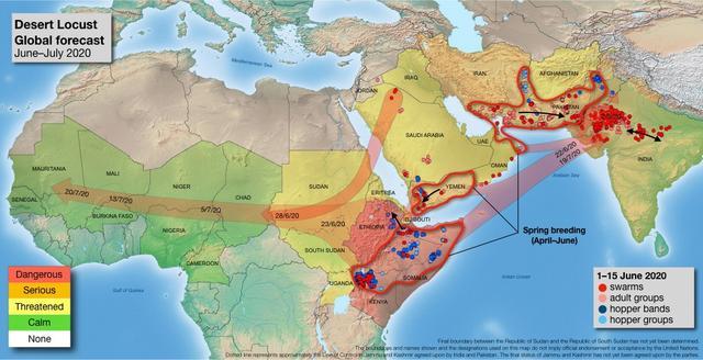 棉花:印巴蝗灾二次爆发,全球产量威胁加大