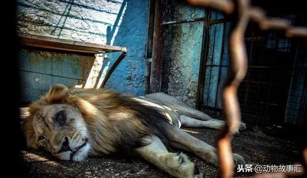 世界上最差的动物园,映射出人心的肮脏···