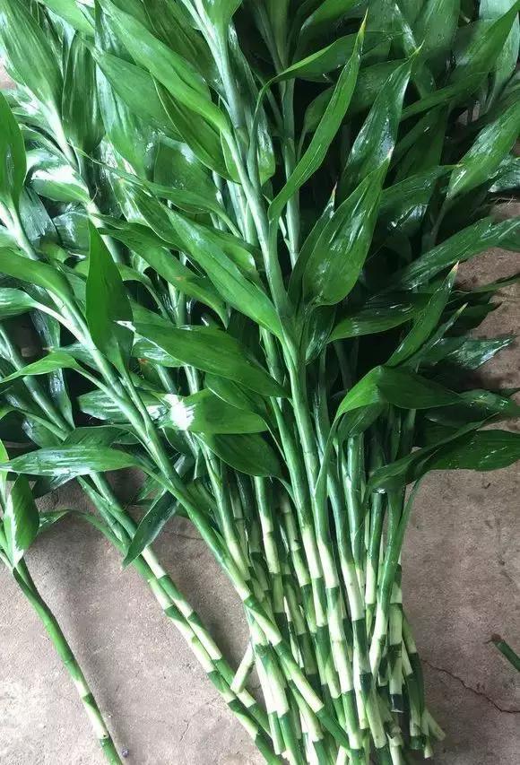 富贵竹怎么养,怎么个换水法