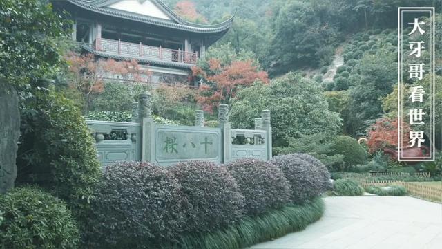 龙井树不是只有十八棵吗?天福茗茶卖的龙井是正宗的吗?