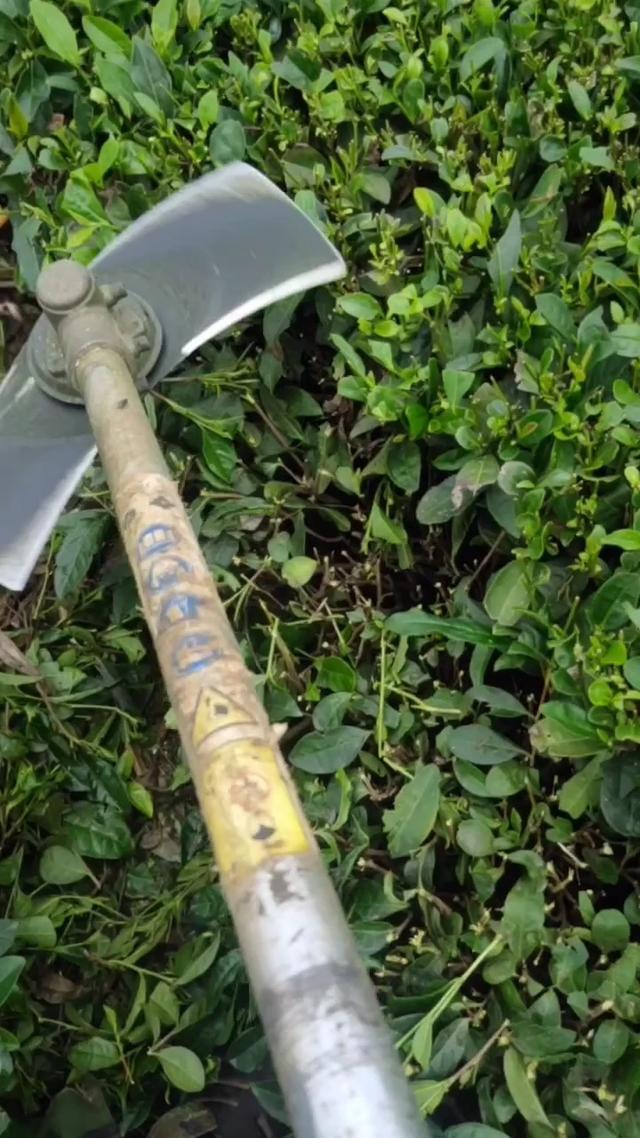 想在广东地区找台茶叶拣梗机或者茶叶机械厂