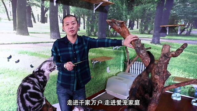 锦州哪里有卖猫的