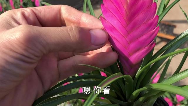 青州小盆栽批发市场在哪儿呢