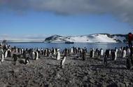 穿越南极圈,直击海豹猎食企鹅