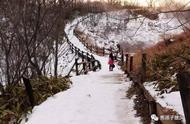 看企鹅遛弯、打雪仗撒欢,北海道承包了我对冬天所有的幻想