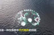 罕见:座头鲸吐泡泡捕鱼,鱼群被泡泡困住后被大口吞下