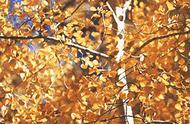 我为什么会如此喜欢秋天?