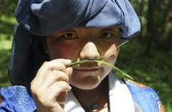 西藏米林药王谷里采藏药:探访神秘藏医发祥地