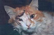 十年前这只猫咪在七级地震中幸存下来,如今他已经成为生命的传奇