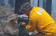 12张感人照片,消防员冒着生命危险拯救动物,不得不赞!
