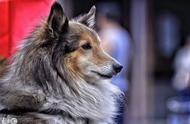 随手拍的一只狗狗,颜值逆天,网友:简直就是狗狗界的吴彦祖!
