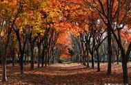 秋天是很美的,有爱情的秋天,更是美到了极致