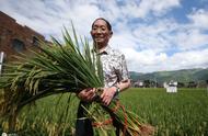 亩产1365公斤!袁隆平团队长江中游双季稻产量再创新高