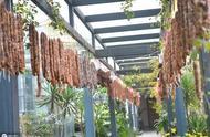 四川現土豪老板,50米走廊掛滿1千斤臘腸,網友:大戶人家