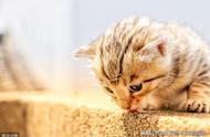 猫有哪些比较常见的肢体语言?