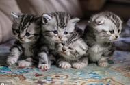 喵!今天是国际猫咪日,你吸猫了吗?