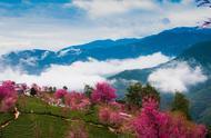 #头条带你游中国# 无量山樱花谷在初冬惊现满山谷的五彩斑斓