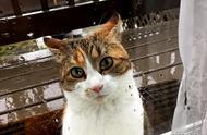 辟谣:猫咪讨厌洗澡并不意味着怕水,原因要从它们祖先的习性说起