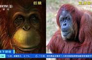 科学家从190万年前化石提取DNA:原来,广西巨猿和亚洲猩猩是亲戚