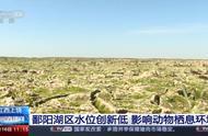 鄱阳湖区水位创新低:天鹅、大雁都不来了