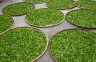 全发酵法制成的茶什么茶是全发酵茶