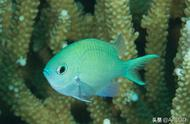 研究表明3D打印珊瑚可以保护海洋生态