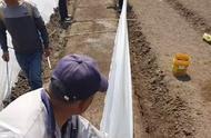 袁隆平又有大动作!海水稻正从试验田走向餐桌,要高产更要优质