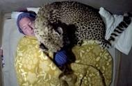 男子与两只猎豹成朋友 每晚把猎豹当枕头一起睡觉