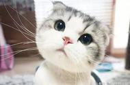 29张图告诉你女孩子喜欢养猫的真正原因!女朋友变这样,你愿意吗